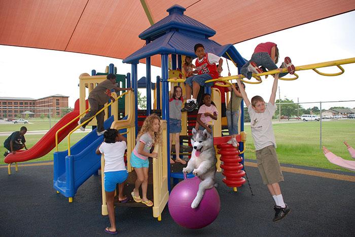 Batalla Photoshop - Husky en jardin de niños