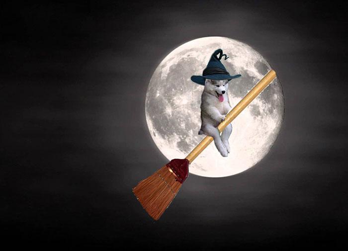 Batalla Photoshop - Husky brujo
