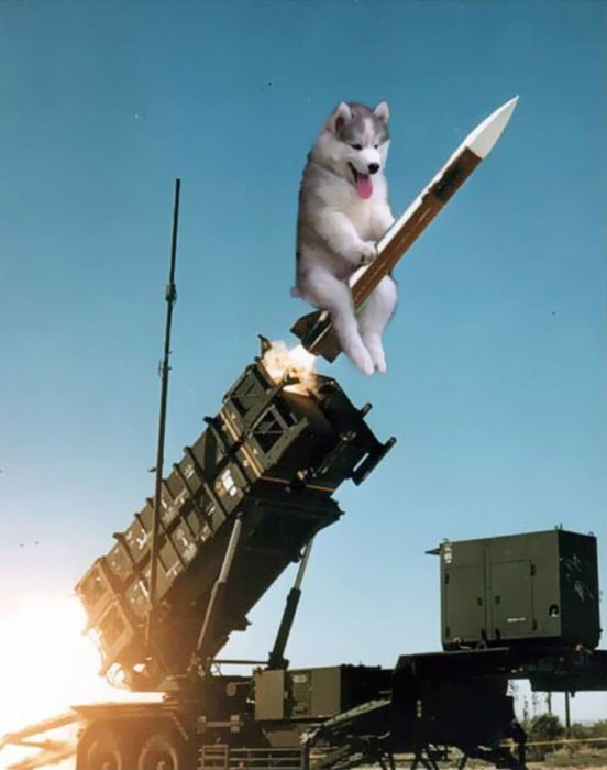 Batalla Photoshop - Husky en cohete