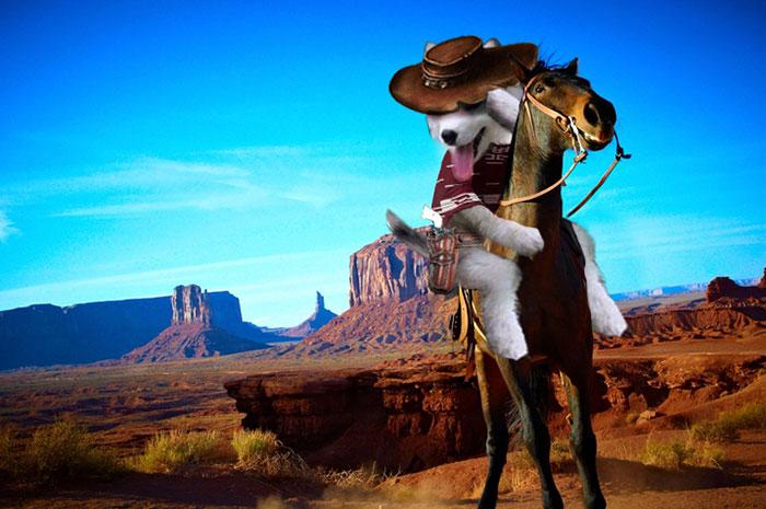 Batalla Photoshop - Husky vaquero