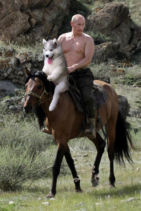 Batalla Photoshop - Husky cabalgando un caballo con Putin