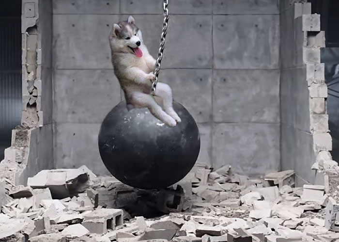 Batalla Photoshop - Husky wrecking ball
