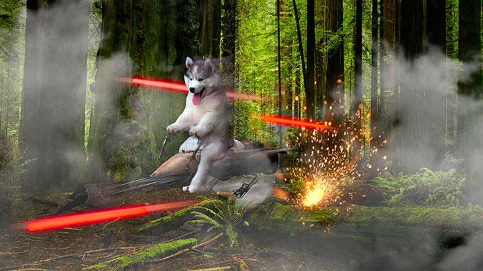 Batalla Photoshop - Husky en una nave
