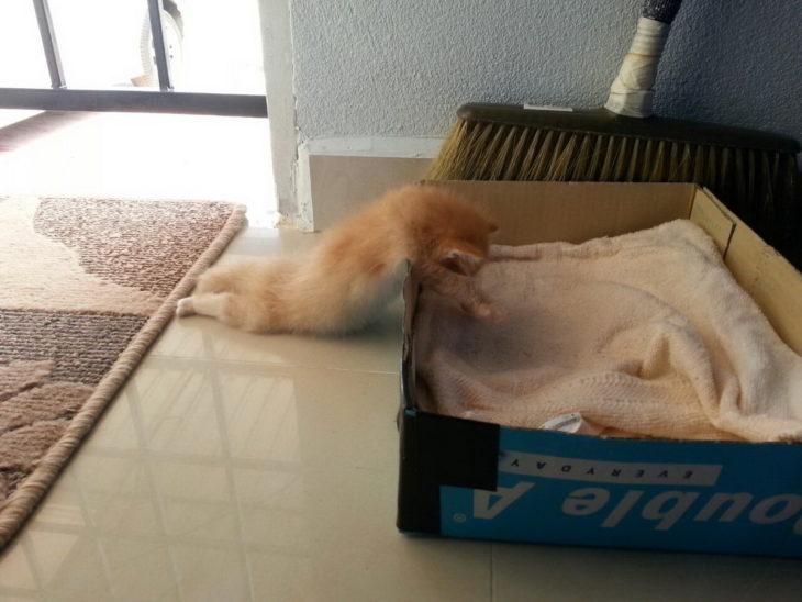 gatito agotado