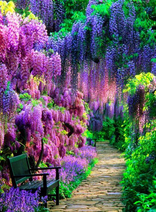 sendero en jardines de japón