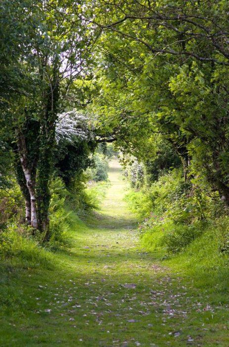 tpunel de árboles en kit hill inglaterra