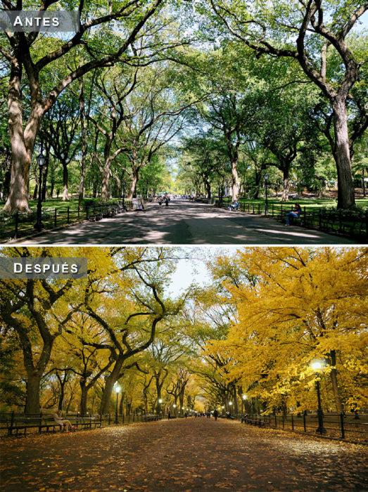 Otoño - parque antes y después