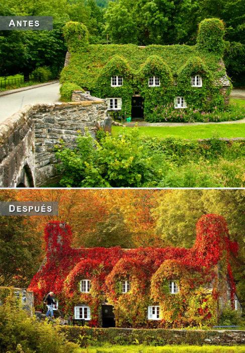 Otoño - casa tapizada antes y después