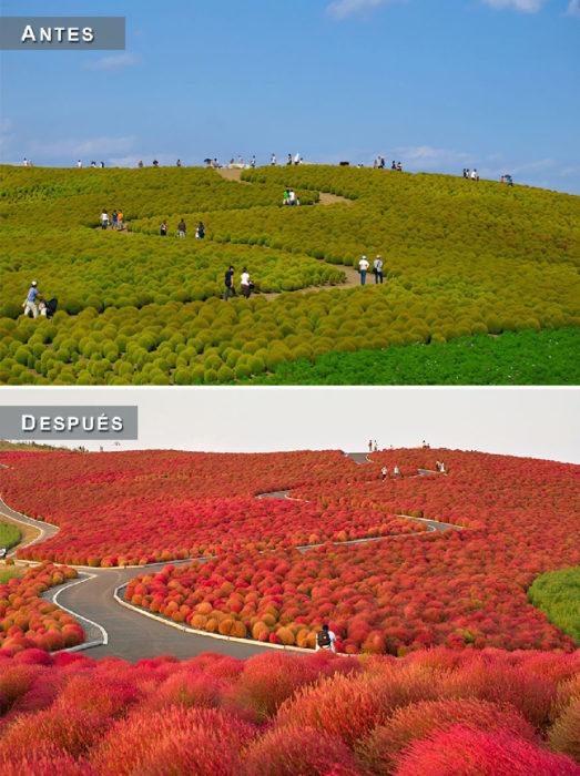 Otoño - campo antes y después
