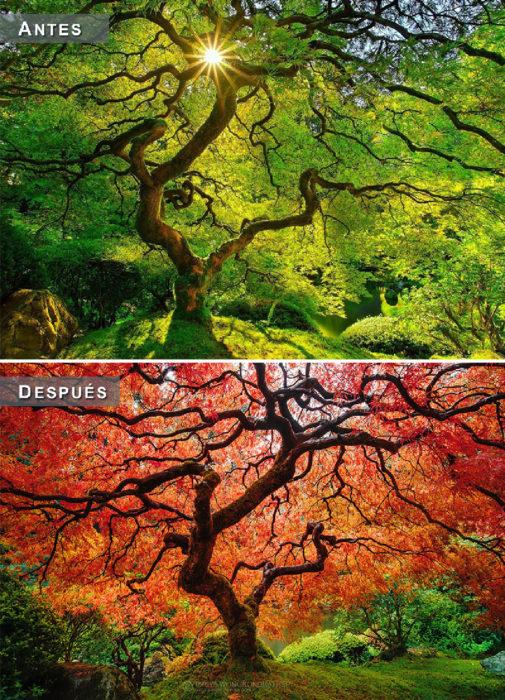 Otoño - arbol antes y después