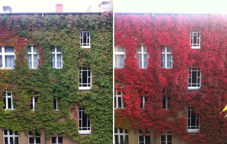 Otoño - casa antes y después
