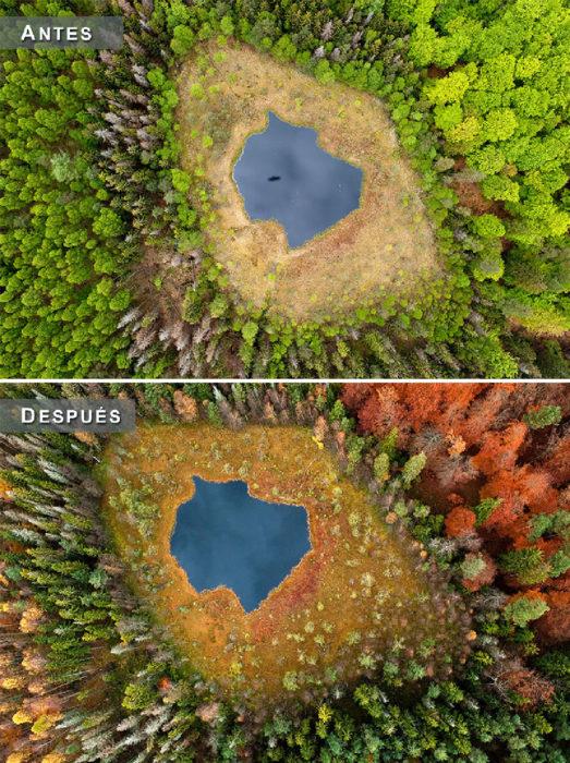 Otoño - lago en medio de un bosque antes y después