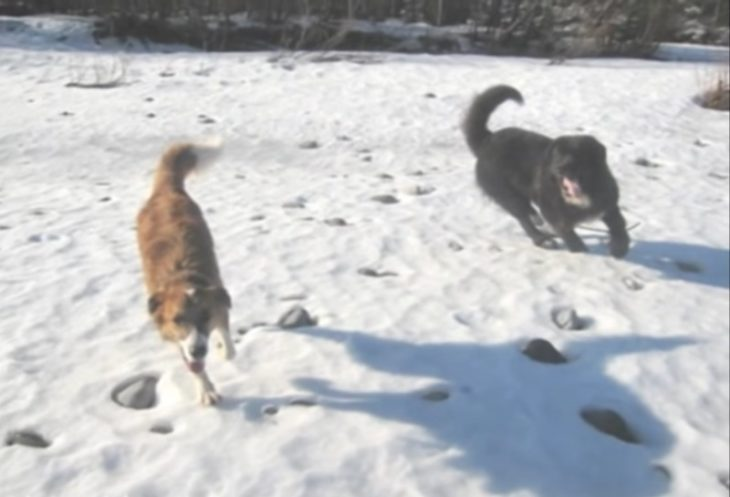 Diesel jugando con otros perros rescatados