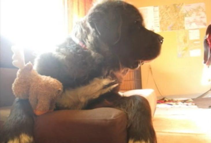 Perro sentado en un sillón