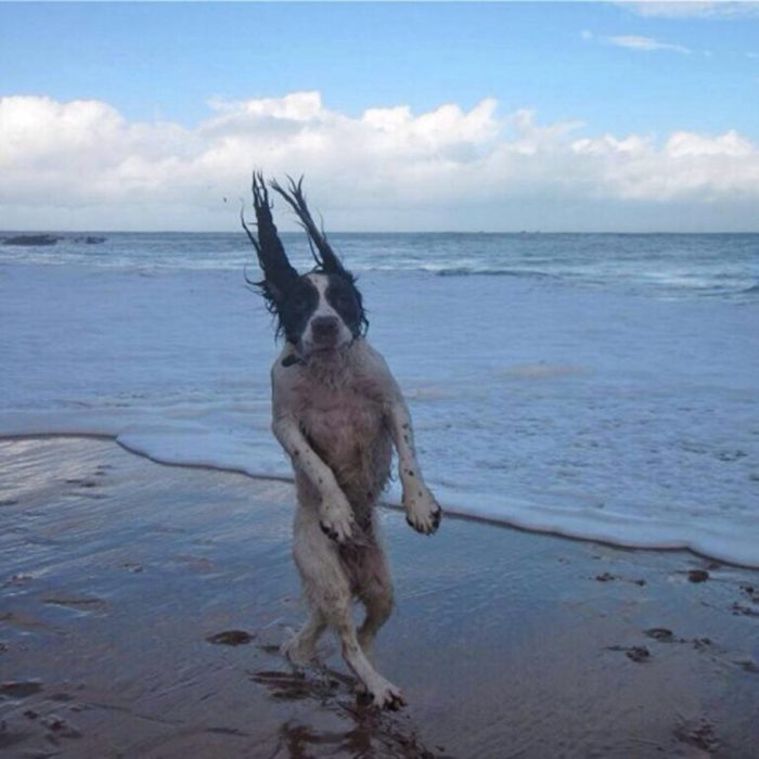perro caminando sexy