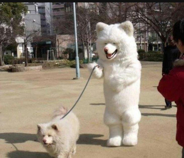 perro pasea perro