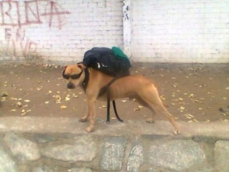 perro de barrio