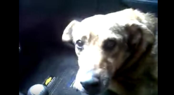 Perro mira a la cámara