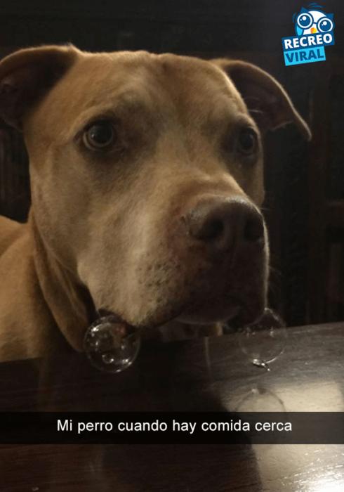 Snapchats perros - pitbull babeando