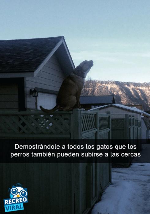 Snapchats perros - perro en la cerca ladrando