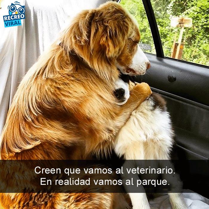 Snapchats perros - dos perros en el carro asustados