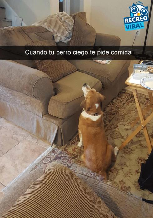 Snapchats perros - perro mirando un sillon vacío