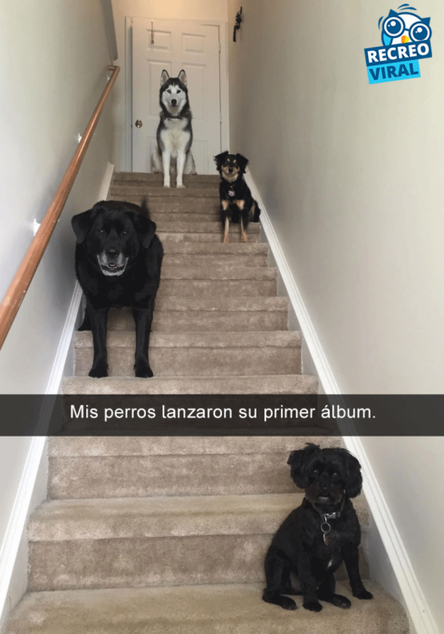 Snapchats perros - cuatro perros en la escalera