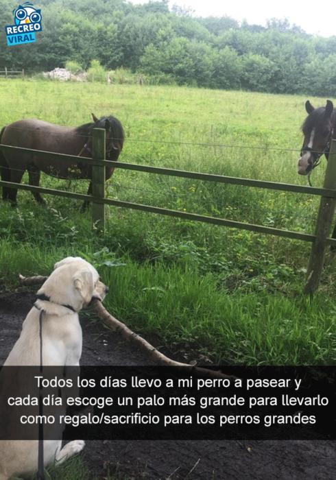 Snapchats perros - perro lleva palo a caballos