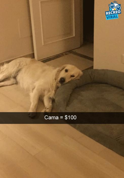 Snapchats perros - perro dormido al lado de su cama