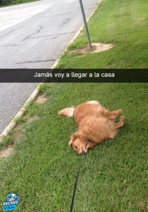 Snapchats perros - perro tirado en el pasto