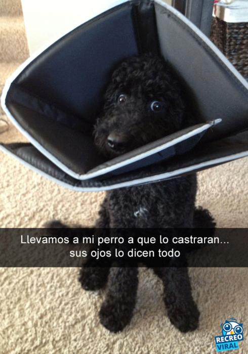 Snapchats perros - perro con un cono