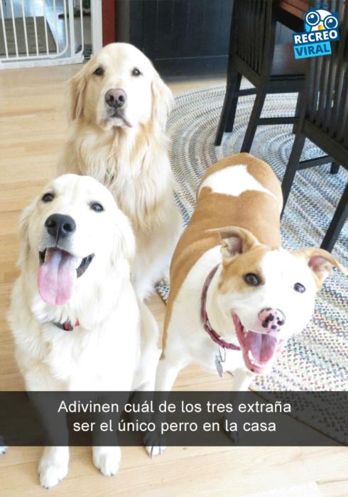 Snapchats perros - dos perros felices y uno no