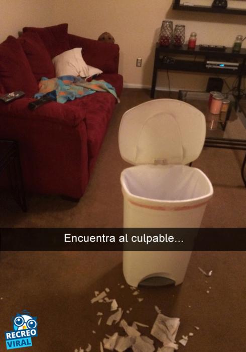 Snapchats perros - perro escondido