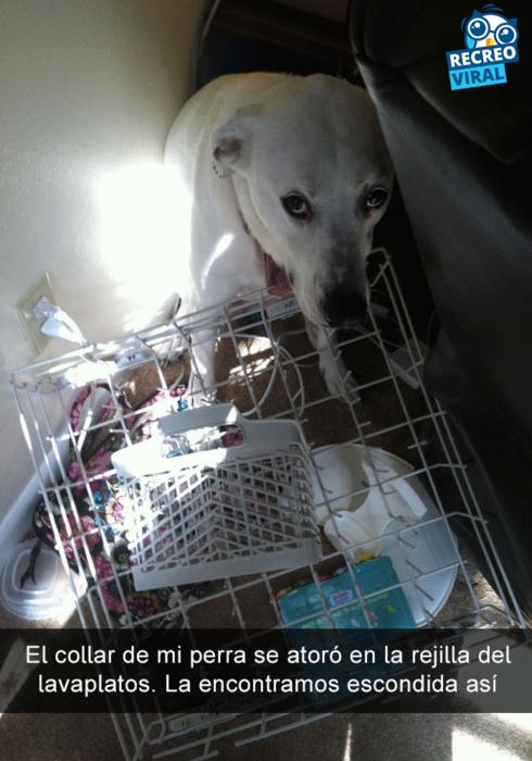Snapchats perros - perro escondido atras de sillon