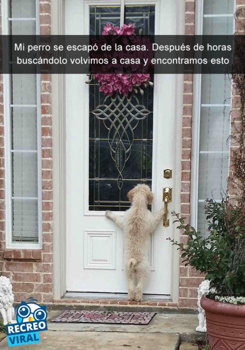 Snapchats perros - perro asomado en una casa