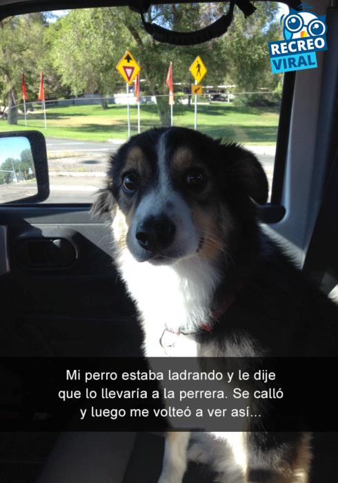 Snapchats perros - perro cara de sorpresa en el carro
