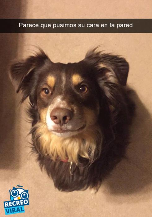 Snapchats perros - pero parece montado en la pared