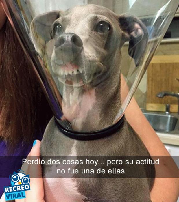 Snapchats perros - pero atorado en cono de la verguenza