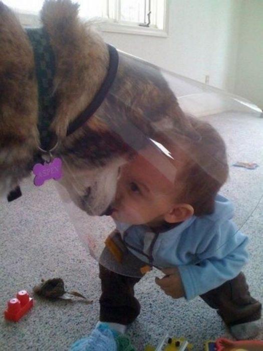 Niño jugando con perro dentro del cono de la vergüenza
