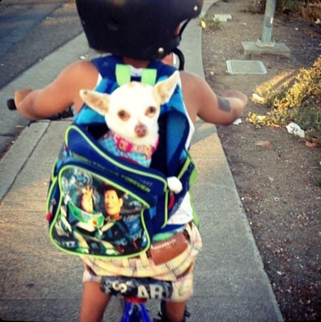 Perrito en la mochila del niño