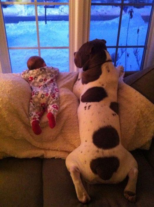 Bebé y perro asomados en la ventana