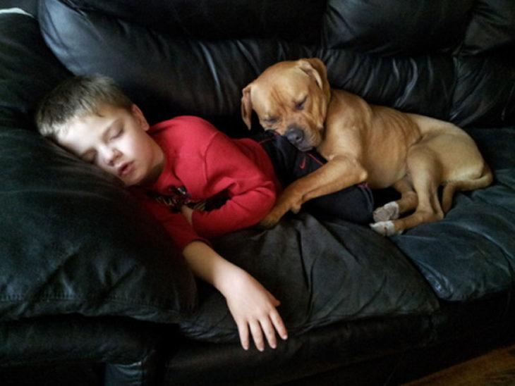Perro y niño dormido en el sillon