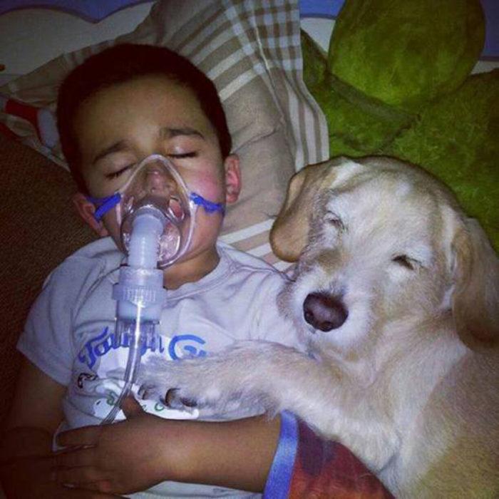 Perrito abrazando aun niño enfermo