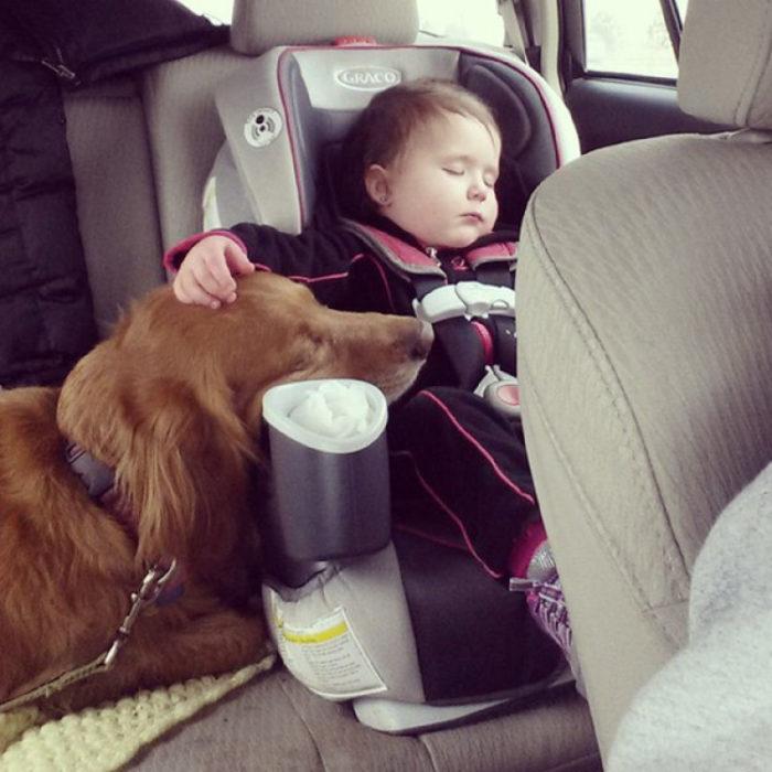 Perro dormido jnto a niño