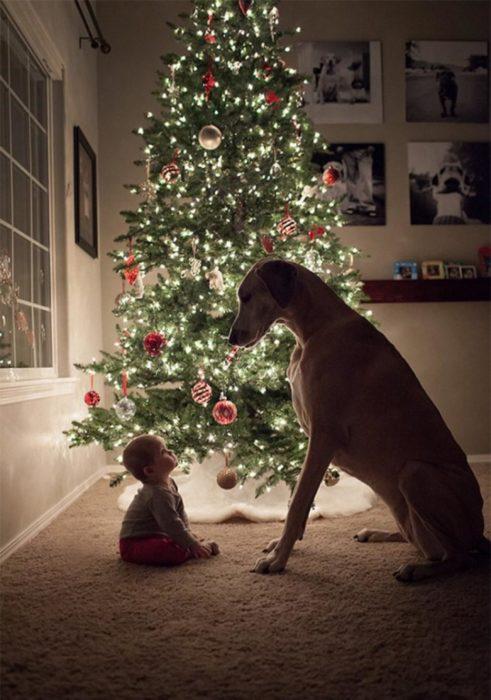 Bebé viendo a un perro alto que está sentado frente a ella (estan frente al arbol de navidad)