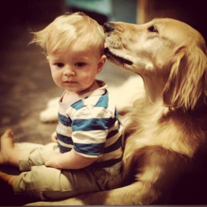 Perro lamiendo a bebé
