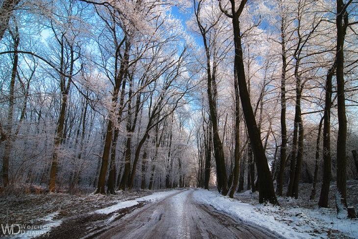 paisaje de invierno en polonia