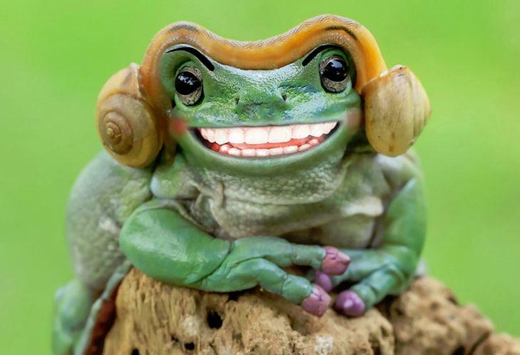Batalla PS - rana sonriendo peinado