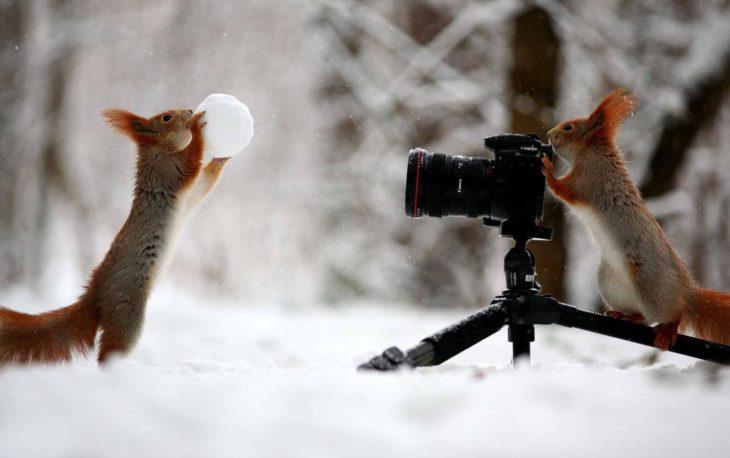 Ardillas tomándose fotos