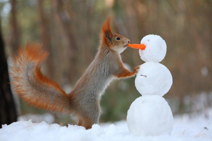 Una ardilla con un mono de nieve